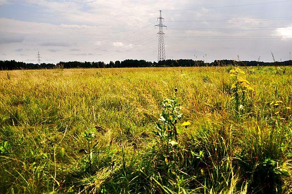 Коттеджный посёлок «Изумруд», Новосибирск, Толмачево, фотография участка